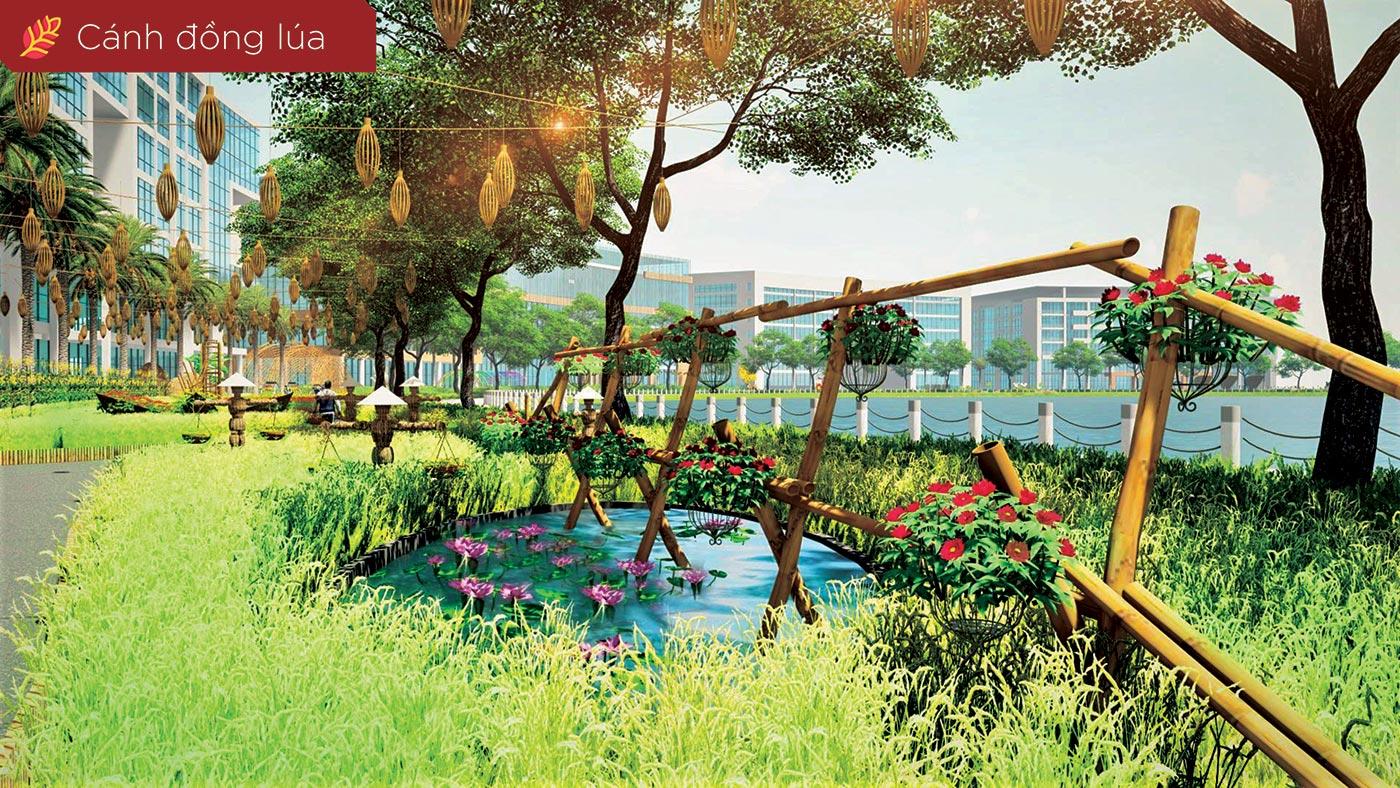 Cánh đồng lúa trỗ bông với cầu tre, ao nước, biểu tượng của đồng quê Việt