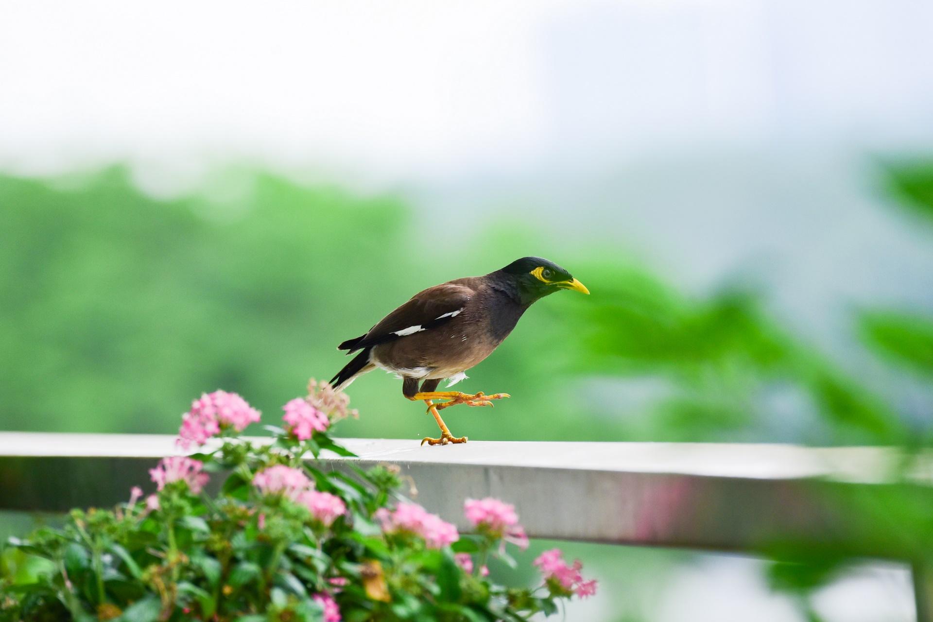 Ở phố Có một nơi chim về làm tổ